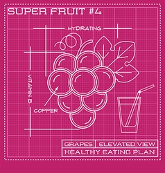 Blueprint diagram line drawing of red grapes vector
