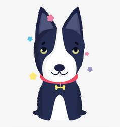 cute dog with bone collar domestic cartoon animal vector image