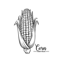 Hand drawn corn icon vector