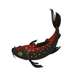 koi carp icon beautiful pond japanese animal vector image