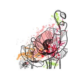 Poppy splash flower colorful summer background vector