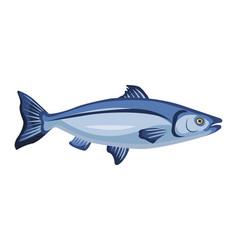 raw whole salmon icon isolated on white background vector image