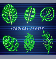 tropic leaves neon set detailed template icons vector image