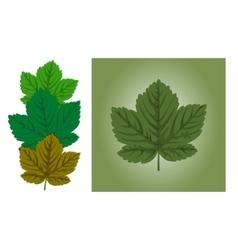 Maple leaf background vector image vector image