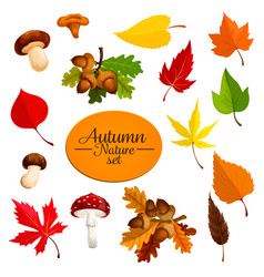 autumn falling leaf forest mushrooms set vector image