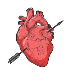 heart pierced with arrow sketch engraving vector image