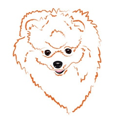 Pomeranian vector