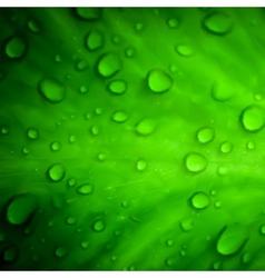 Water drops on green leaf macro background vector