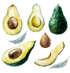 Watercolor avocado set vector image