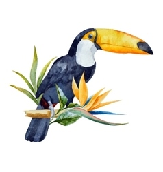 Watercolor toucan vector