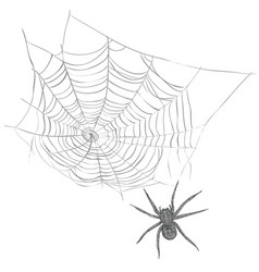 a spider weaves a spider web vector image vector image