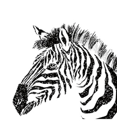 abstract zebra silhouette with grunge vector image