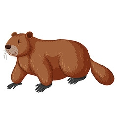 Beaver with happy face vector image