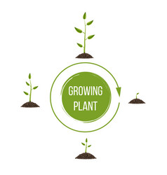 creative of growth up green vector image