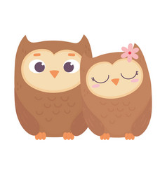 happy valentines day cute couple owls love vector image