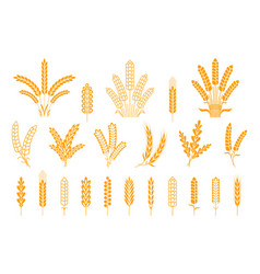 wheat and rye ears oats barley rice spikes and vector image