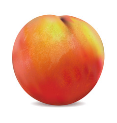 apricot fruit isolated on the white background vector image vector image