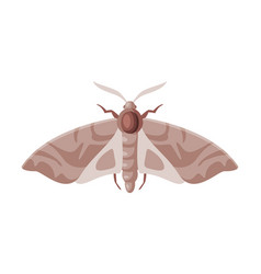 clothes moth winged insect pest control and vector image