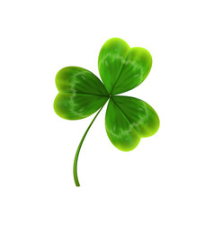 Green leave of clover realistic vector