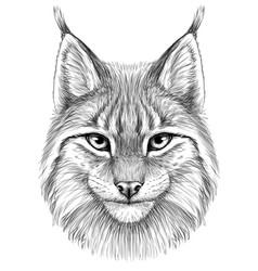 lynx sketch drawn graphic portrait a vector image