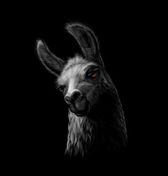 portrait of a head of a llama on a black vector image