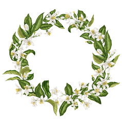 Wreath in vintage style with citrus flowers in vector