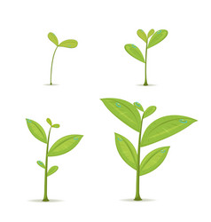 plant green leaf grow set vector image vector image