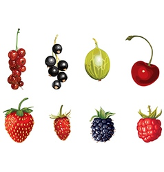 ripe berries vector image