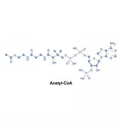 Acetyl coenzyme A molecule vector