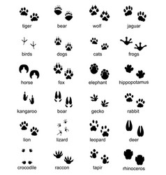 Footprints of wild animals vector