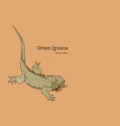 green iguana lizard hand draw sketch vector image