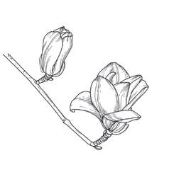 Line art flowers Magnolia vector