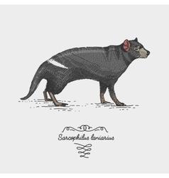 tasmanian devil engraved hand drawn vector image