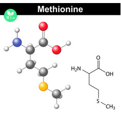 Methionine proteinogenic essential amino acid vector image vector image