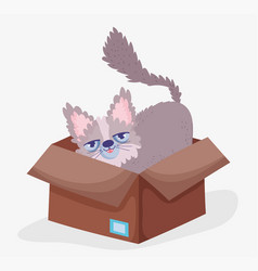 cute cat in box domestic cartoon animal pets vector image