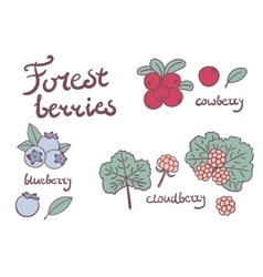Forest berries collection vector