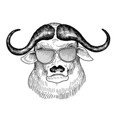 hand drawn head bull vector image