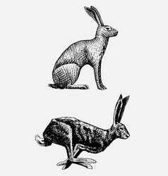 Rabbit or hare sitting and running hand drawn vector