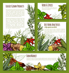 Spice or herb farm market seasonings sketch vector