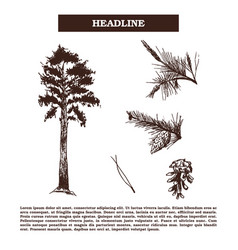 vintage engraving pine-tree vector image