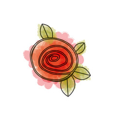 watercolor drawing of button red rose with leaves vector image vector image