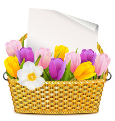 Basket with tulips vector
