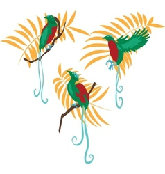 Bird of paradise set vector