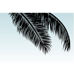 coconut leaves with copy space tropical summer vector image