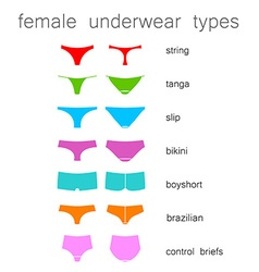 female underwear types vector image