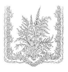 Lace scarf is ornamented vintage engraving vector