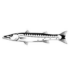 Barracuda fish black and white vector