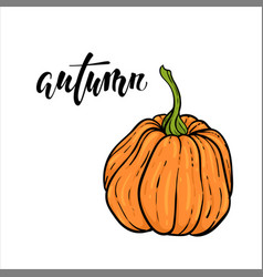 pumpkin and autumn text hand drawn calligraphy vector image