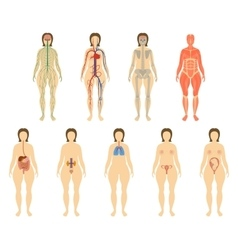 Set woman organs and systems of the body vitality vector image