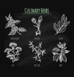 Spicy herbs on chalkboard background vector
